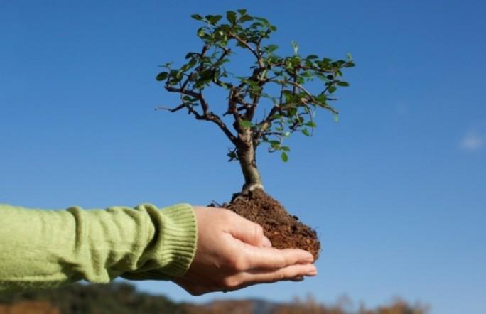 Тюменцев приглашают принять участие в акции «Посади дерево Победы»