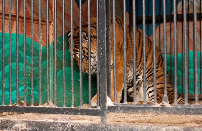 В Украине запретили передвижные зоопарки и другие издевательства над животными