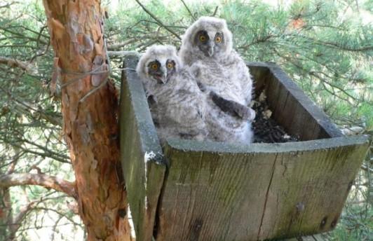 Тюменские орнитологи установили гнездовые ящики для сов