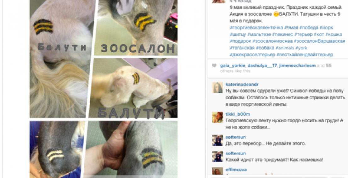 В московском зоосалоне собакам делают тату в виде георгиевской ленточки