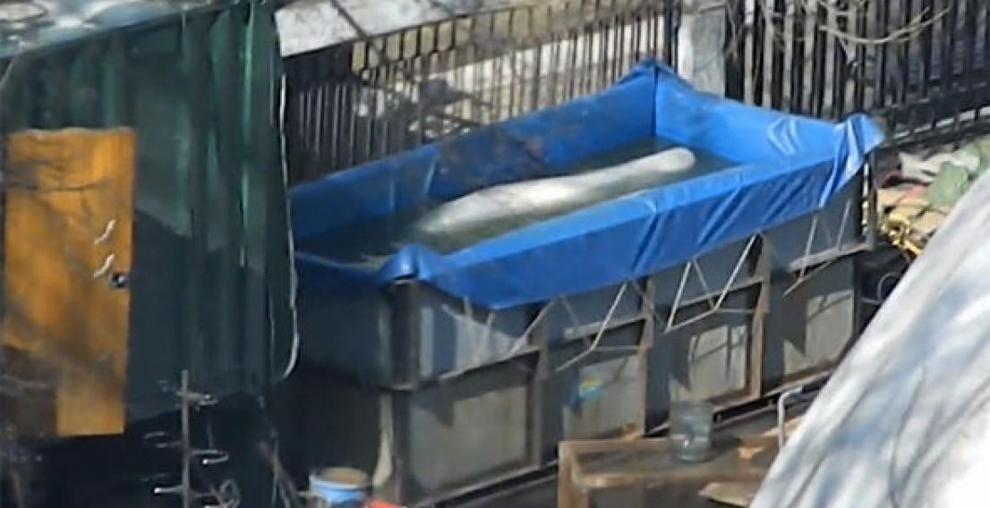 Передвижной дельфинарий оштрафовали на 500 тыс. руб. за незаконное содержание дельфинов