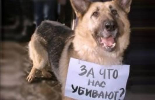 В Тюмени пройдёт всероссийская акция по защите животных