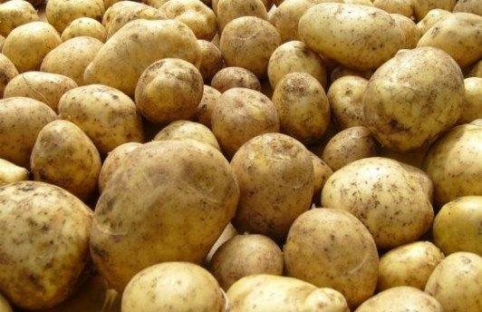 На Ямале будут выращивать семенной картофель