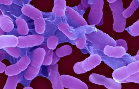 ВОЗ составила список опаснейших супербактерий